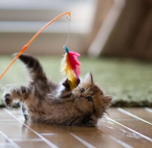 kitten_playing